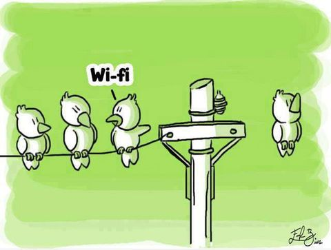 wifi fi free as a bird